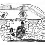 """Coupe schématique de tombes fouillées à La Salina. Site situé dans la vallée moyenne du Rio Rimac © Machacuay y Aramburú 1998"""""""